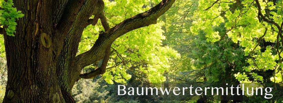 Baumwertermittelung Gutachten